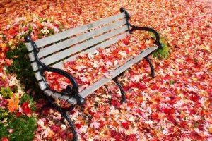 automne-banc-feuilles